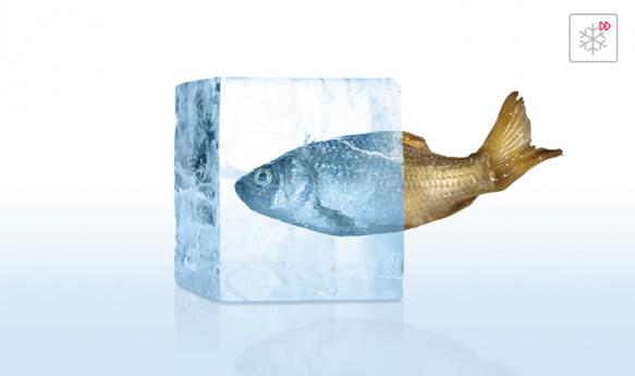 Halb gefrorener Fisch