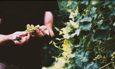 Exzellente Weintrauben sind der Anfang, richtiges Wein kühlen der letzte Schritt vor dem Genuss edler Tropfen.
