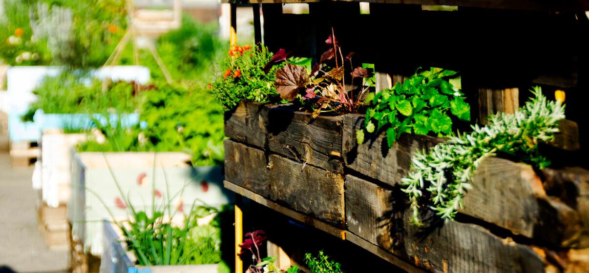 Urban Gardening Tipps und Beispiele
